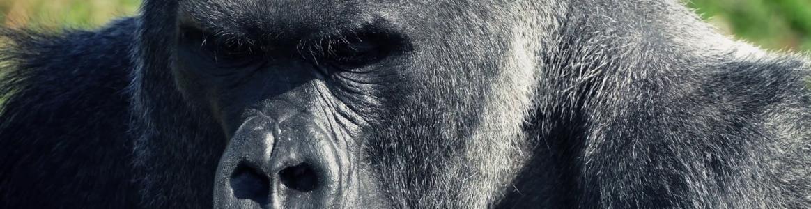 35: Mike Tyson vs Silverback Gorilla (with Dave Warneke ...